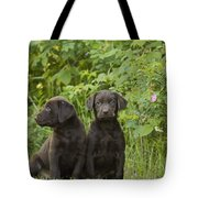 Chocolate Labrador Retriever Puppies Tote Bag by Linda Freshwaters Arndt