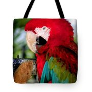 Chowtime Tote Bag by Karen Wiles