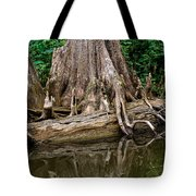 Clinging Cypress Tote Bag by Christopher Holmes