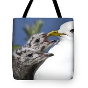 Close Up Of A Mew Gull With Two Hungry Tote Bag by Ken Baehr