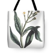 Clove Eugenia Aromatica Tote Bag by Anonymous