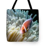 Clownfish 9 Tote Bag by Dawn Eshelman