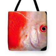 Common Discus Tote Bag by Dante Fenolio