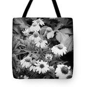 Coneflowers Echinacea Rudbeckia Bw Tote Bag by Rich Franco