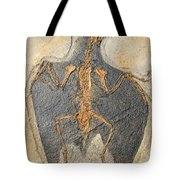 Confuciusornis Fossil Tote Bag by Millard H Sharp