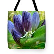 Crab Spider On Closed Gentian Wildflower - Gentiana Andrewsii Tote Bag by Mother Nature