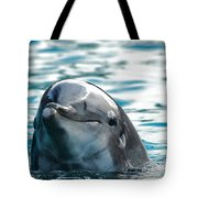 Curious Dolphin Tote Bag by Mariola Bitner
