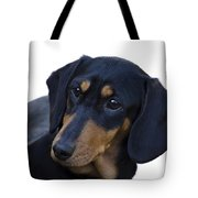 Dachshund Tote Bag by Linsey Williams