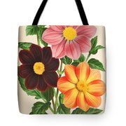 Dahlia Coccinea from a Begian book of flora. Tote Bag by Philip Ralley