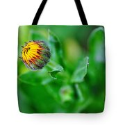 Daisy Bud Ready To Bloom Tote Bag by Kaye Menner