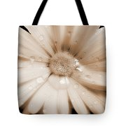 Daisy Dream Raindrops Sepia Tote Bag by Jennie Marie Schell