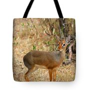 Dik Dik Tsavo National Park Kenya Tote Bag by Amanda Stadther