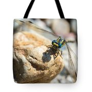 Dragonfly Tote Bag by Marco Oliveira