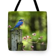 Eastern Bluebird Tote Bag by Christina Rollo