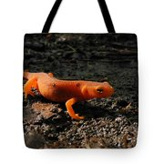 Eastern Newt Red Eft Tote Bag by Christina Rollo