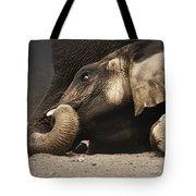 Elephant - lying down Tote Bag by Johan Swanepoel