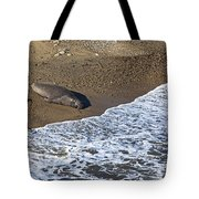 Elephant Seal Sunning On Beach Tote Bag by Garry Gay