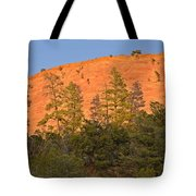 Every Tree in Its Shadow Tote Bag by Christine Till