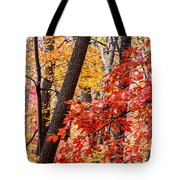 Fall In The Forest Tote Bag by John Haldane
