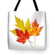 Fall Maple Leaves On White Tote Bag by Elena Elisseeva