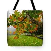 Fall Maple Tree In Foggy Park Tote Bag by Elena Elisseeva