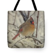 Female Cardinal In The Snow II Tote Bag by Sandy Keeton