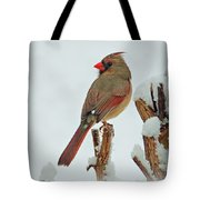 Female Cardinal In The Snow Tote Bag by Sandy Keeton