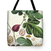 Fig Engraved By Johann Jakob Haid  Tote Bag by German School