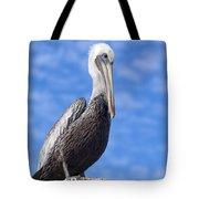 Florida Brown Pelican Tote Bag by Kim Hojnacki
