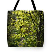 Forest Path Tote Bag by Elena Elisseeva
