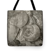 Fossilized Shell - B And W Tote Bag by Klara Acel