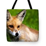 Fox Pup Tote Bag by Fabrizio Troiani