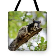 Fox Squirrel Tote Bag by Cynthia Guinn