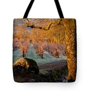 Frost In The Valley Of The Moon Tote Bag by Bill Gallagher