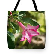 Fushia Oleander Near Phoenx Arizona 1 Tote Bag by Douglas Barnett