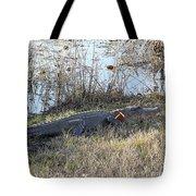 Gator Football Tote Bag by Al Powell Photography USA