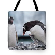 Gentoo Penguin With Chick Begging Tote Bag by Konrad Wothe