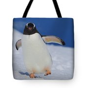 Gentoo Waddle Tote Bag by Tony Beck