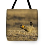Golden Light On The Prairie Tote Bag by Thomas Young