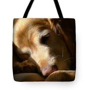 Golden Retriever Dog Sleeping in the Morning Light  Tote Bag by Jennie Marie Schell