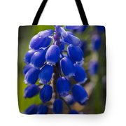 Grape Hyacinth Tote Bag by Adam Romanowicz