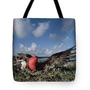 Great Frigatebird Female Eyes Courting Tote Bag by Tui De Roy