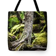 Green Forest Tote Bag by Aaron Aldrich