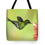 Green Thorntail Hummingbird Tote Bag by Anthony Mercieca