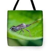 Grey Plant Bug 1 Tote Bag by Douglas Barnett