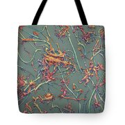 Growth Tote Bag by James W Johnson