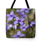Happy Tiny Bluet Wildflowers Tote Bag by Kathy Clark