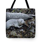Harbor Seal Pup Resting Tote Bag by Suzi Eszterhas
