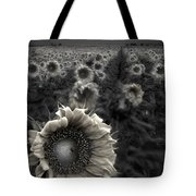 Haunting Sunflower Fields 1 Tote Bag by Dave Dilli