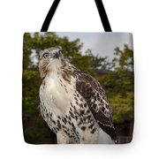 Hawk Tote Bag by Luke Moore
